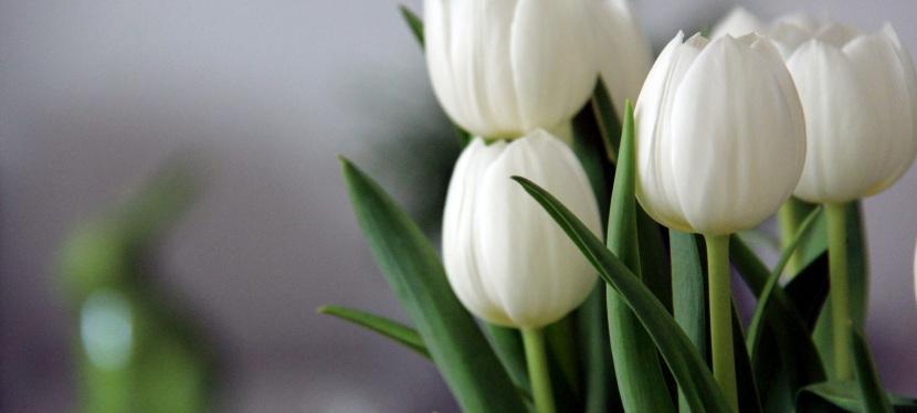 Flowers of Forgiveness